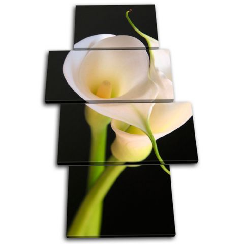 Calla Lily Flowers Floral - 13-1209(00B)-MP04-PO